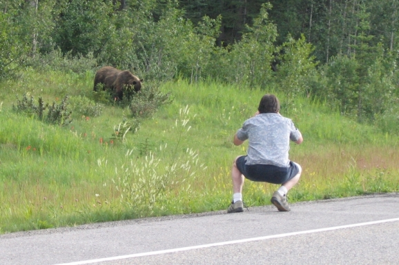Grizzly bear and tourist, Hwy 40, Kananaskis Trail, Alberta
