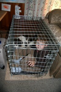 Home Sweet Home -- Leo and Nicky in the crate, just like old times