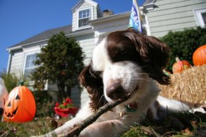 Nicky at home, enjoying a stick