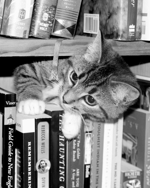 Pickles, the avid reader!