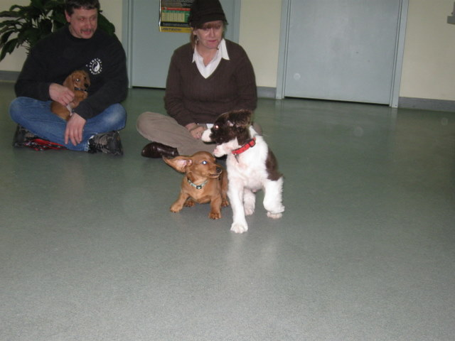 ...followed by puppy class on Monday night (Jupey and Horton)