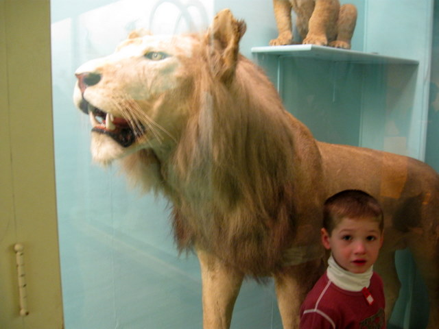Leo and the lion