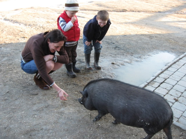 Sophie loves the new pig -- just check her FB profile photo!