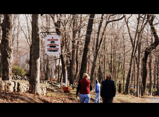 We think the best one is Ingraham Tree Farm in Georgetown, MA. We got our  tree here a few years ago and little did we know we'd live down the street  from ... - Cut-Your-Own Christmas Tree, North Of Boston Life With Leo